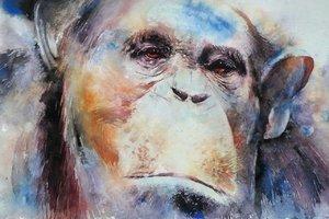 Chimp 19