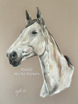 Zangersheider Pferd, Reitpferd aus Belgien